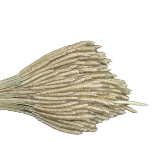 Dry Flower  VLA-005