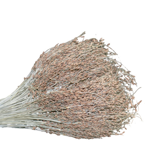 Dry Flower  VLA-011