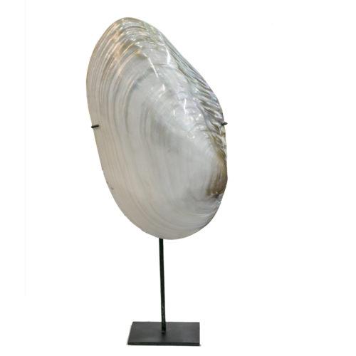 shells + Stand  ARA-005