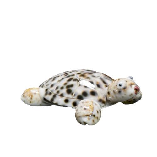 Turtle  RAS-001